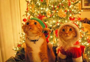 Кот и Новый год: безопасность превыше всего