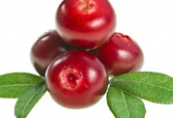 Брусника – полезная ягода хвойных лесов