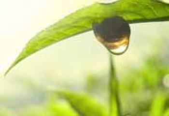 Польза зеленого чая — все о самом известном целебном напитке