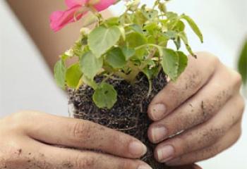 Как разводить комнатные цветы
