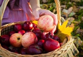 В осень с диетой