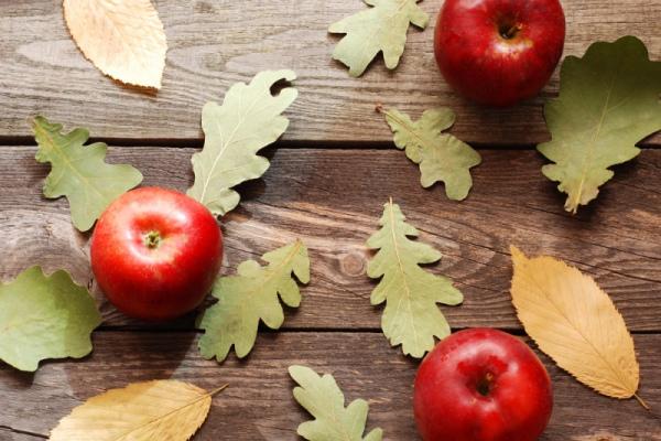 Пять лучших осенних диет