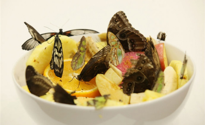 Дэмиен Херст обвиняется в массовом убийстве бабочек