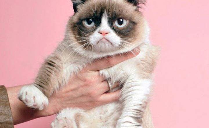Кот с серьёзным лицом