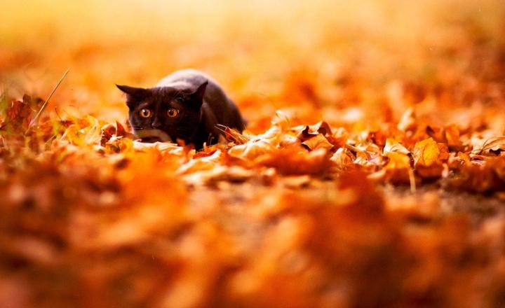 Как сохранить осень