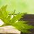 Пустырник: удивительные свойства распространенного растения