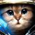 Котики в космосе: спасение или угроза?